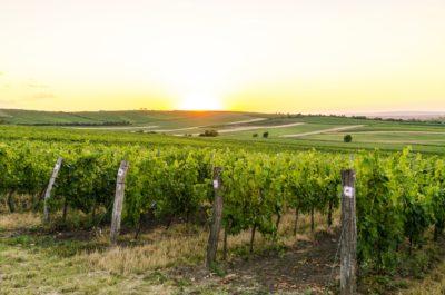 Winestate Oy:n Ympäristöohjelma