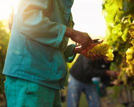 Mitä vastuullisuus viineissä tarkoittaa?